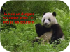 pandas WWF