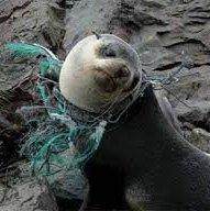 """""""Le continent des déchets , des océans et des animaux en dangers"""" un article"""