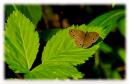 Photo de papillon8-de-nuit