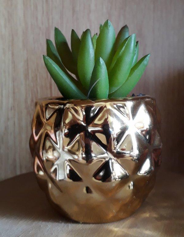 Une nouvelle plante !