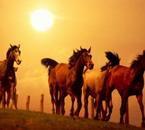 mon ami le chevale