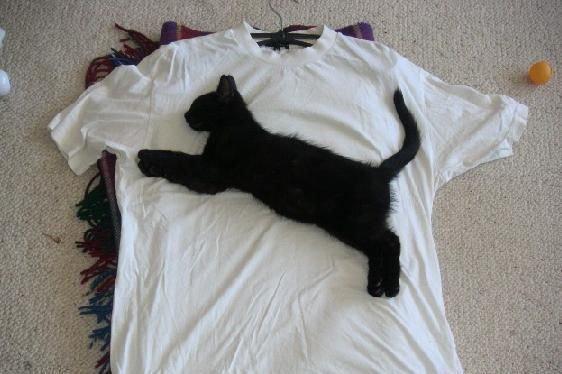 t-shirt-puma !!!