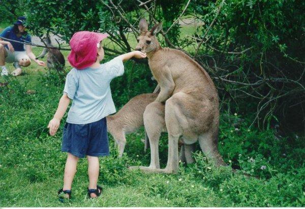L innocence et le monde animal !