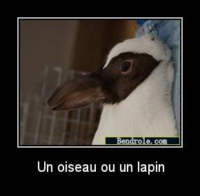 mouette lapin illusion !