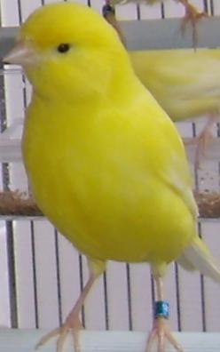 RIPRODUTTRICI 2008 ♀