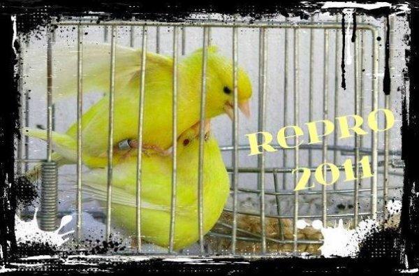 """RIPRODUZIONE 2011 """"SI COMINCIA"""""""