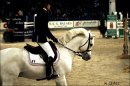 Photo de poons-chevaux-celebres-x