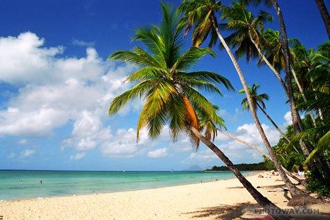 Aloha le summer
