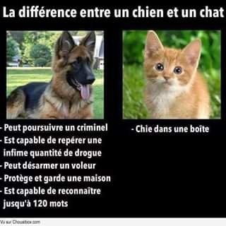 La vérité véritable sur les chats
