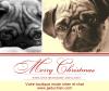 Joyeux Noël  de la part de la boutique mode pour chien et chat www.jaiduchien.com !
