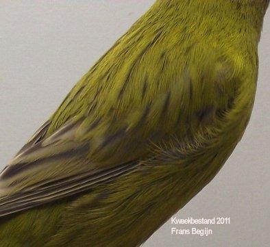 Agaat Kobalt Geel Intensief - Man - ( rugdetail )