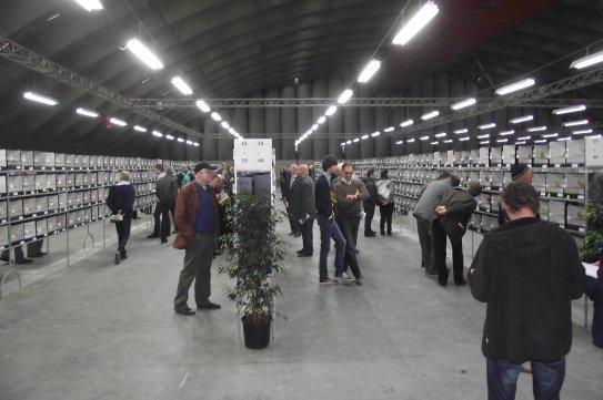 Sfeerbeelden - Verkoopafdeling - Showafdeling - Mechelen V.v.N.K.- C.O.M. - 05.11.2011