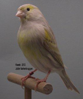 Op 't hok bij Juliën Vanherbruggen te Nukerke Maarkedal (B) - Bruin Eumo Geel Moz. T1
