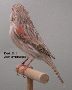 Op 't hok bij Juliën Vanherbruggen te Nukerke Maarkedal (B) - Agaat Onyx Rood Moz. T1