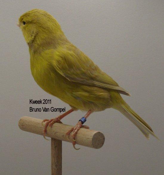 Op 't hok bij ... Bruno Van Gompel te Perk (B) Bruin Pastel Geel Intensief - Pop