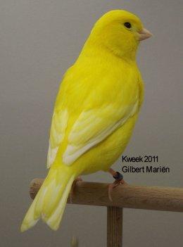 Op 't hok bij ... Gilbert Mariën te Koningshooikt (B) Lipochroom Geel Intensief - Man
