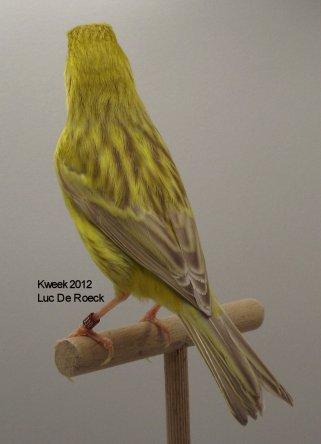 Op 't hok bij Luc De Roeck te Lede - Bruin Eumo Geel Int. - Man - Gold Medal Winner WK