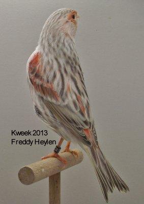 Op 't hok bij ... Freddy Heylen te Grobbendonk (B) - Agaat Eumo Rood Mozaiek T1 & T2