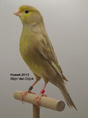 Op 't hok bij ... Stijn Van Dijck te Zandhoven (B) De Jaspis in Diversiteit
