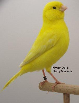 Op 't hok bij ... Gerry Mertens te Booischot (B) Lipochroom Geel