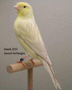 Op 't hok bij ... Gerard Verhaegen te Ossendrecht (NL) 'experimentele exemplaren'