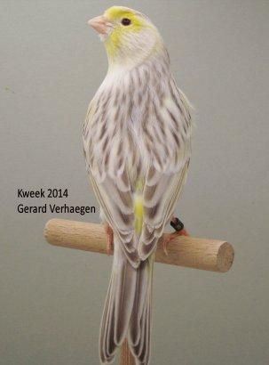 Op 't hok bij .. Gerard Verhaegen te Ossendrecht (NL) - Agaat Eumo Geel Mozaiek T1-T2