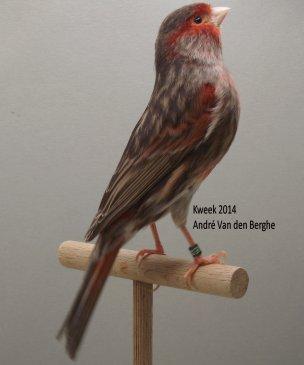 Op 't hok bij André Van den Berghe te Sint-Maria-Oudenhove (B) -  Bruin Rood Mozaiek