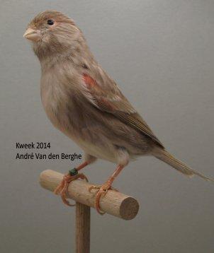 Op 't hok bij André V/d Berghe te Sint-Maria-Oudenhove (B) - Bruin Onyx Rood Mozaiek