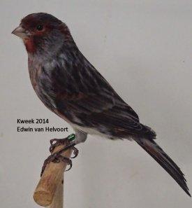 Zwart Rood Mozaiek - T2 Mannen > Edwin van Helvoort (NL)