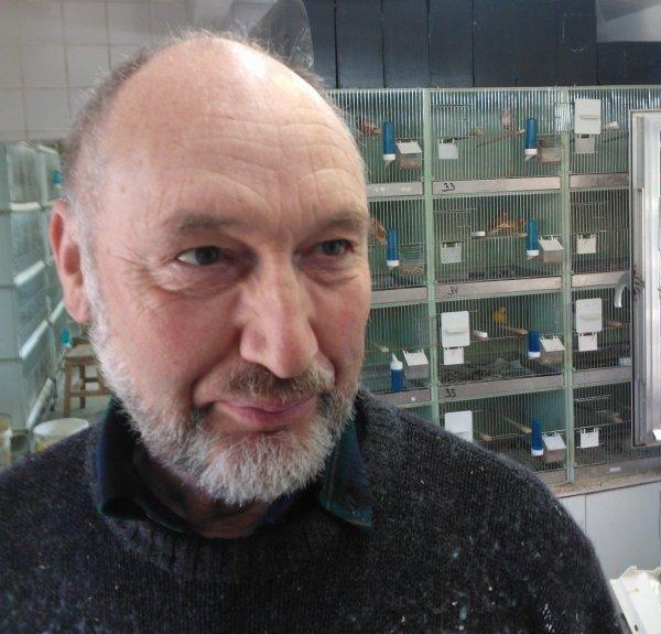 Kleurenexpert-Kanarioloog Matthieu Van Brantegem aan de kweek 2015 te Herzele (B)