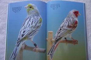 """""""Rosmalen 2015"""" in boekvorm - Kleurkanarie-fotografie door Johan Van der Maelen"""