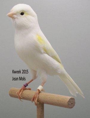 Lipochroomgeelmozaieken, adoratie bij Jean Mols te Mol (B)