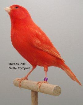 Lipochroom Rode Medaillewinnaars bij Willy Compiet te Hulst (NL)