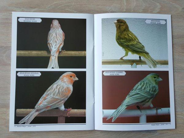 Mutation MOGNO Federaçäo Ornitologica do Brasil
