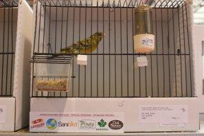 Campeonato del Mundo de Ornitología - Almeria (Esp.) 20-22-01-2017