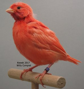 Opnieuw een succesvol lipochroomrood-seizoen bij Willy Compiet te Hulst (NL)