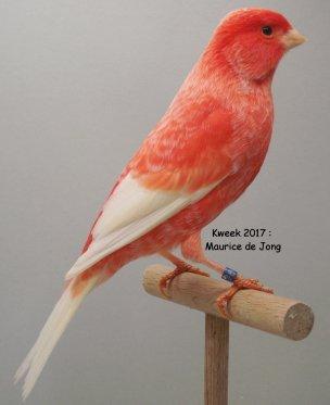 Maurice de Jong > Roodfactorige Top-Specialisatie met een doordachte Variatie (1)