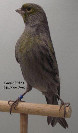 Grootmeester Sjaak de Jong > Diepgaande Materiekennis en Welbespraaktheid