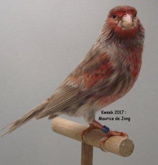 Maurice de Jong > Roodfactorige Top-Specialisatie met een doordachte Variatie (2)