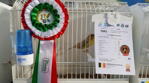 BruinMogno's van Werenfried slaan Gensters op Ornithologisch Wereldtoneel