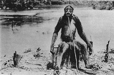 Le singe humanoïde de De Loys