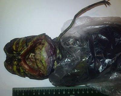 Cadavre d'alien en Russie !
