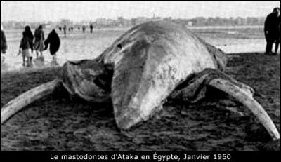 Le mastodonte d'Ataka