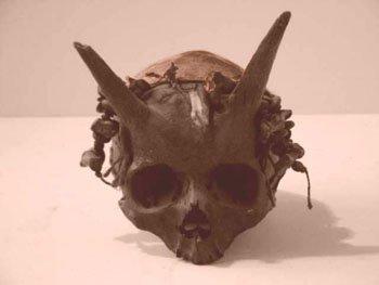 Crâne à cornes !