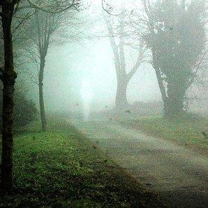 Une silhouette dans le brouillard !