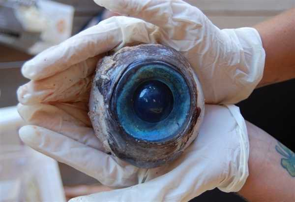 Le mystère de l'oeil perdu !