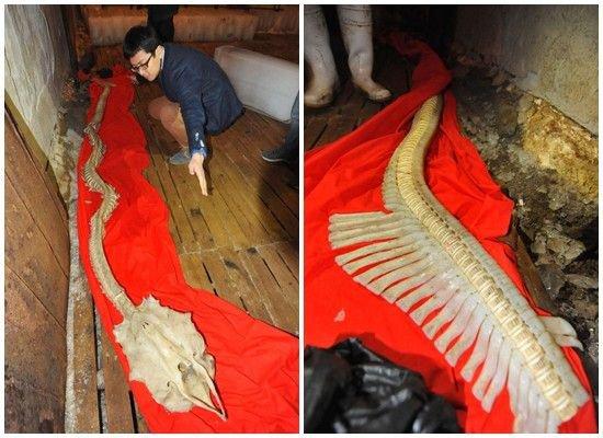 Squelette de dragon !