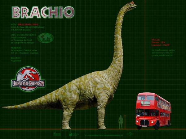 Wallpaper Jurassic Park 3 : Le Brachiosaurus