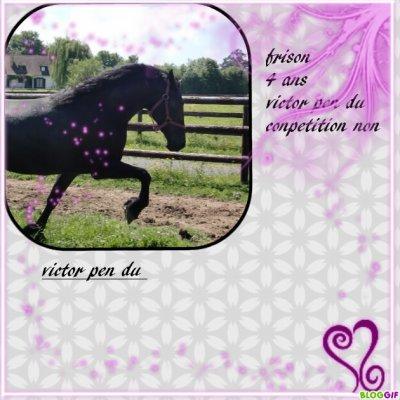 mon cheval !