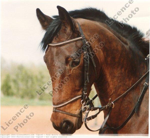 des chevaux super bo !!